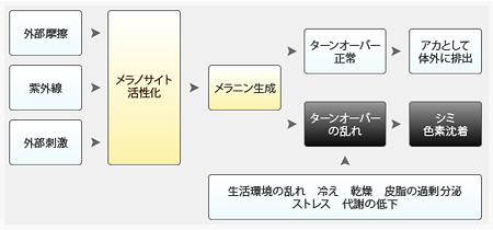 シミ・色素沈着の原因とプロセス