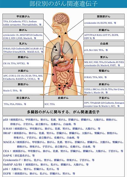 癌(がん)遺伝子検査項目概要